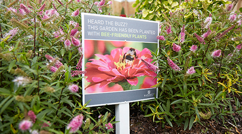 an informative sign explaining how the colourful garden in picture is planted with bee-friendly plants